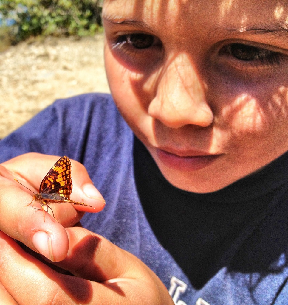 Butterflies and wildlife are everywhere in Plumas National Forest